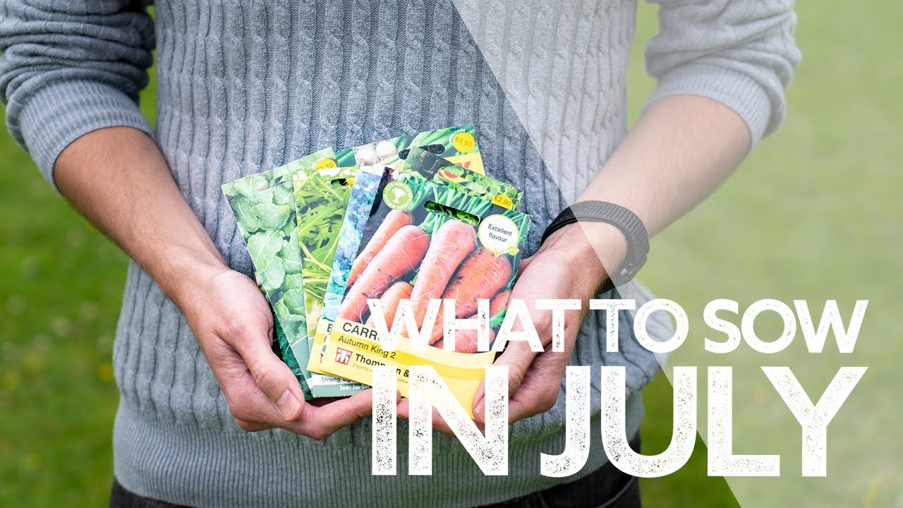 What To Sow in July | Seeds I'm Sowing This Month 2021