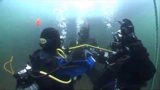 Ocean Turtle Diving 2014