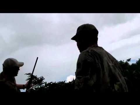 BT Hunting Dove Hunt Nicaragua 2012