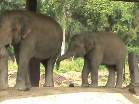The Elephant Breeding Center in Chitwan Park, Nepal