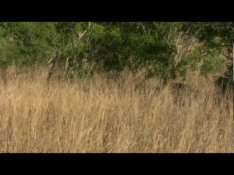 Lion cubs and mother sighted on Safari – Wilderness Dawning Safari.com