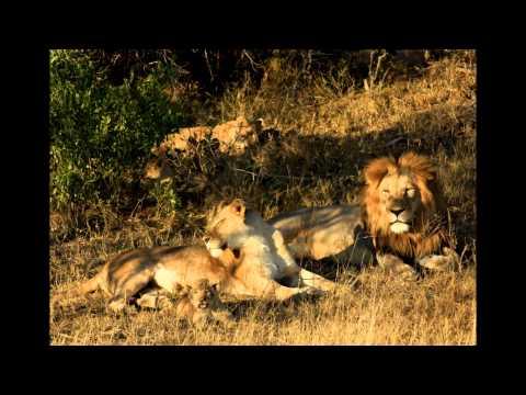 """""""I'll never die"""" by Joe Niemand and the Tshwane Gospel Choir"""