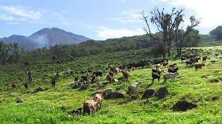 Au Maroc, le nouvel essor des produits du terroir