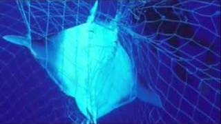 Overfishing of the Oceans