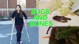 Bugs and Broken Bones
