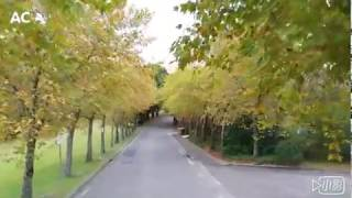 秋天的藍山 (Leura) Autumn in Leura (Blue Mountains)