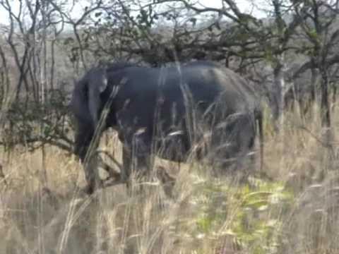 W Parku Krugera