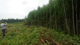 К-744 пашет лес!!!