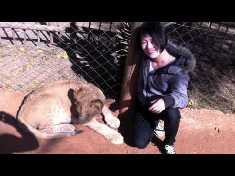 Joburg's Lion Park