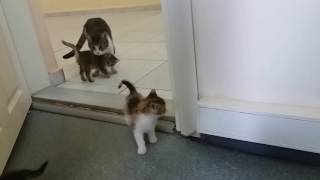 Mom cat meows for me to open the door, because her kittens are behind the door