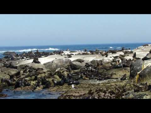 South Africa Seal in Duiker Island (part 2)