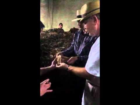 Nicaragua Trip Part 19: A.J. Fernandez and the Fermentation Process