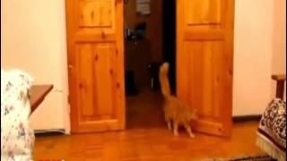 EIC Mario cat fail