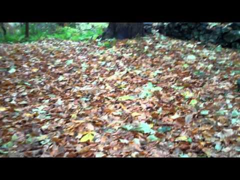 October 26th Woodland Walk Scotland