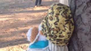 Lemon Tree ( Fool's Garden ) - Version  The Machetes