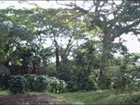 Explore Nicaragua Tours Canopy Mombacho