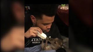 The Weeknd With A Baby Kangaroo