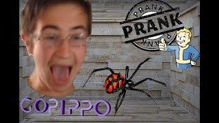 Scherzo Terrificante Ragno - The Best Prank Ever!