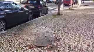 28/11/2014 Avenida Sidónio Pais - Em frente à entrada do Pav. Carlos Lopes