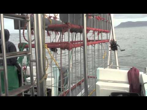 Great White Shark cage diving – South Africa