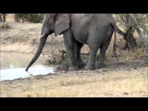 African Safari – Elephants, Hippos, Zebra