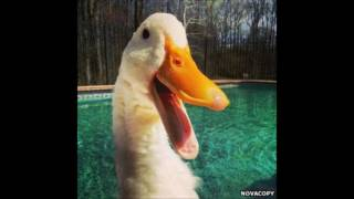 fluffing a duck remix