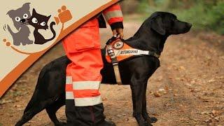 Rettungshundeausbildung - Die Ausbildung zum Rettungshund