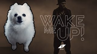 AVICII - WAKE ME UP em CACHORRÊS (ORIGINAL)