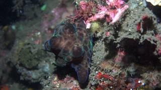 Diving Bali in 4K UHD