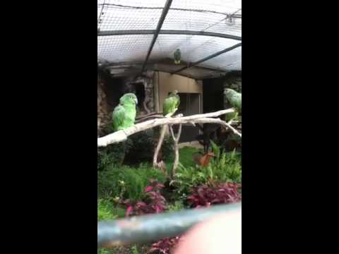 Macaw sings for us
