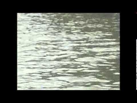 Delfines cazando en los manglares