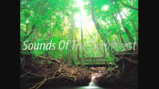 Sounds Of The Rainforest - Broken Piano