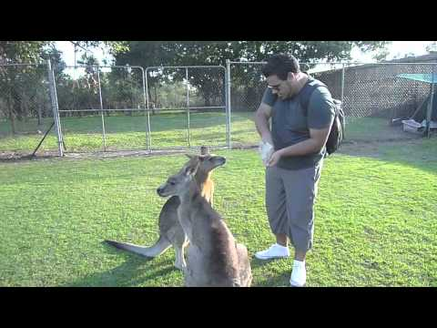 Thiago Coppi in Australia, New Zealand and South Africa 2009/2010
