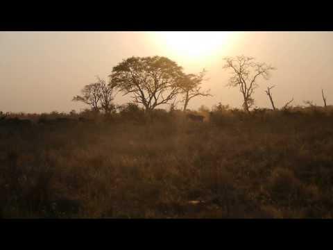 Zebras in the Okavango Delta at Sunset