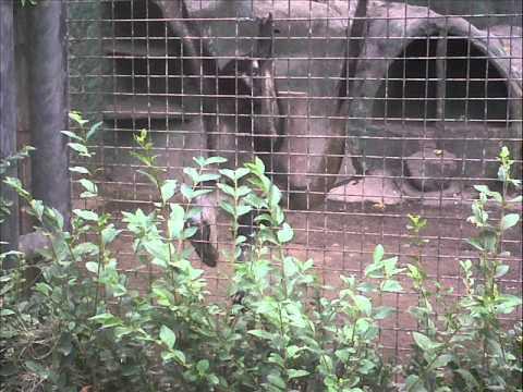 Visita a el zologico de ecuador quito