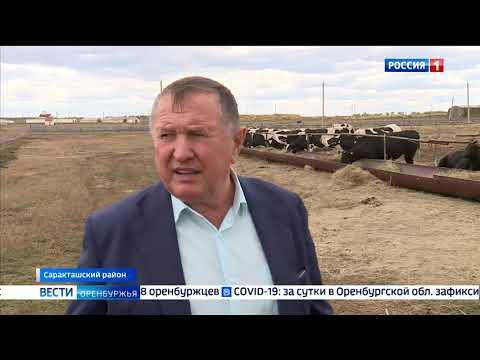 В селе Красногор готовятся открыть молочную ферму на 800 голов