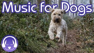 How to Relax My Dog: 15 Hours of Music to INSTANTLY Calm Your Dog! (2019!)