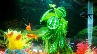 Does Your Fish Tank Need an Air Pump? | Aquarium Care