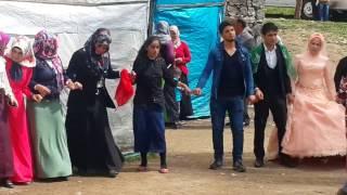 Süper Kürt Halayı Şexani - Koma Tekin - 2017