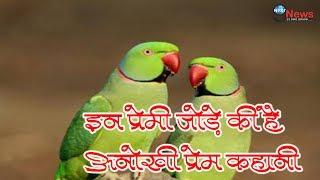 तोते की अनोखी लव स्टोरी, प्रेमिका को पिंजरे से आजाद करा ले गया… | Love Story Of Parrot Couple