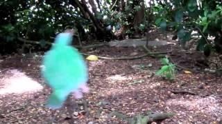 The Kakapo Story