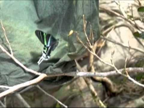Butterflies and Moths in Ecuador