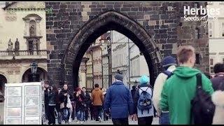 Herbies Presents (Day 2) Cannafest 2013 Prague