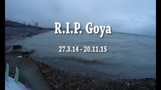 RIP Goya