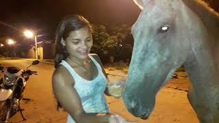 Fãs atravessa rios e baias pra ver a Tigresa Vip e ainda baba na minha mão! Adorei #cavalos