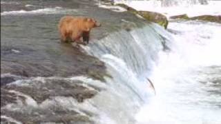 New John West Fisherman and Bear Fight