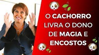 O CACHORRO livra o dono de MAGIA e ENCOSTOS por Márcia Fernandes