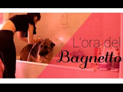 Come asciugare un cane dopo il bagno al mare animali dal mondo - Bagno cane dopo antipulci ...