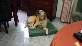 Mi perro cantando Bailando (Enrique Iglesias)