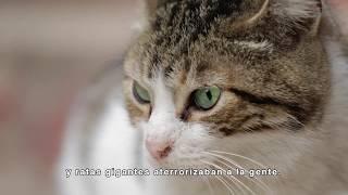 KEDI (GATOS DE ESTAMBUL) - clip 1 - La historia
